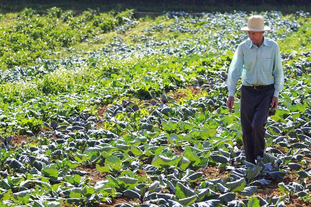 Daoud: É preciso definir uma política agrícola para os pequenos produtores