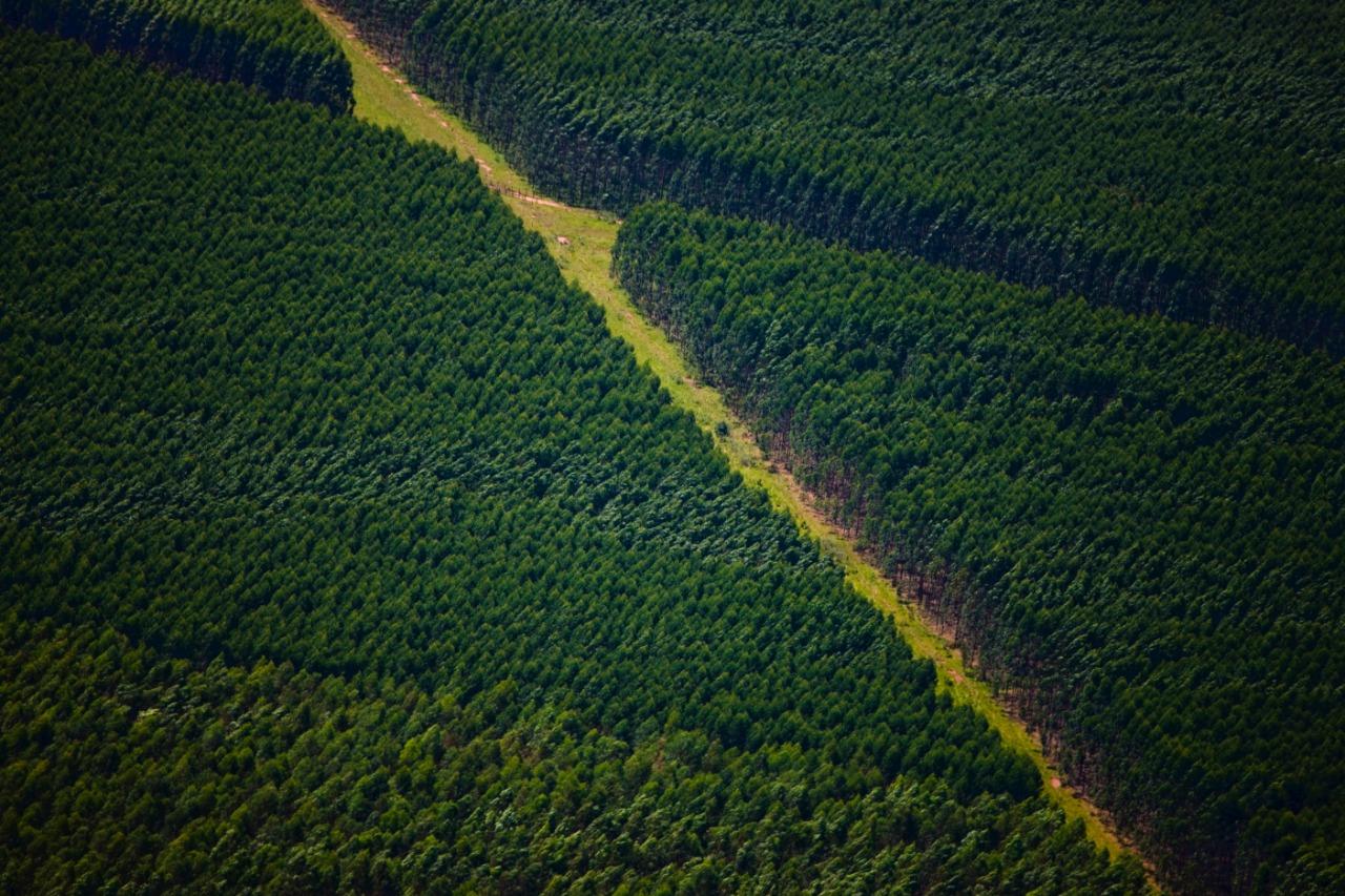 Suzano firma contrato para venda de 21 mil hectares de propriedades rurais